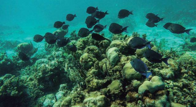 Un arrecife de algún Cayo perdido en el mar del Caribe.