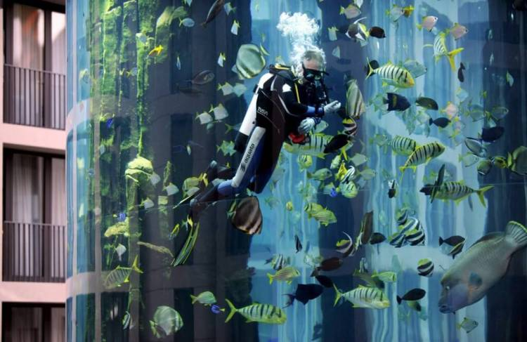 A diver cleans the AquaDome aquarium in Berlin, Germany, 07 August 2008. IMAGE: JENS KALAENE/EPA