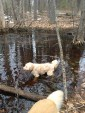 Tika in the frigid cold water. Leave it to a water loving dog.