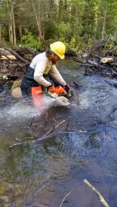 Chainsaw River Clearing