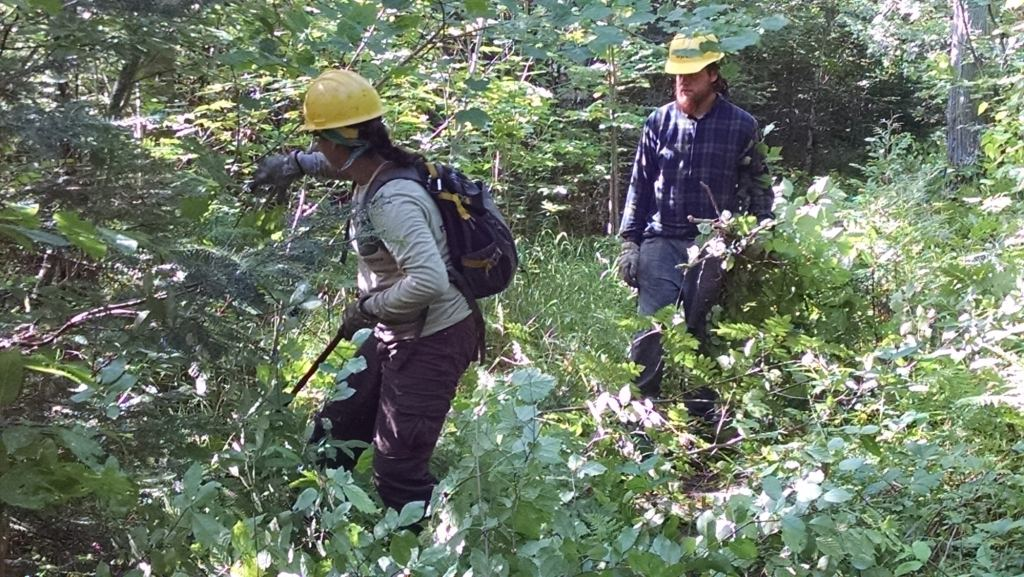 Clearing Trail on Conservation Corps