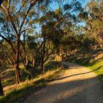 Trail up the hill into Waite Conservation Reserve