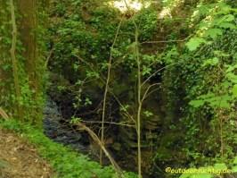 Urige Wälder
