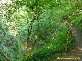 Wieder Urwald
