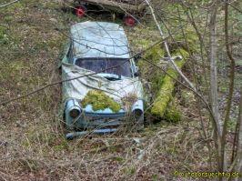 Waldschluchtenweg - 022