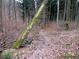 Waldschluchtenweg - 028