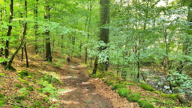Wandern am Edersee - Urwaldsteig Edersee