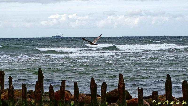 Möwe an der Ostseeküste