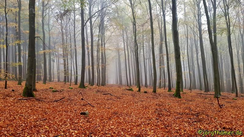 Buchenwald im Nationalpark Hunsrück-Hochwald
