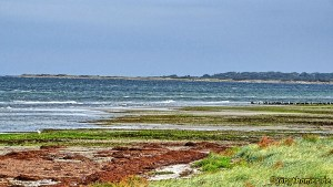 Langenwerder - Vogelparadies an der mecklenburgischen Ostseeküste