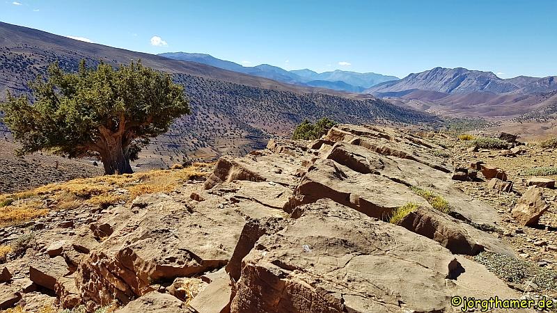 Wacholderbäume Ait Bouguemez Marokko