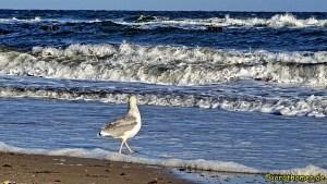 Möwe geht am Strand spazieren