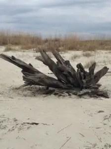 North Tybee Beach