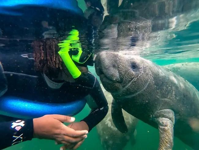 swim with manatees