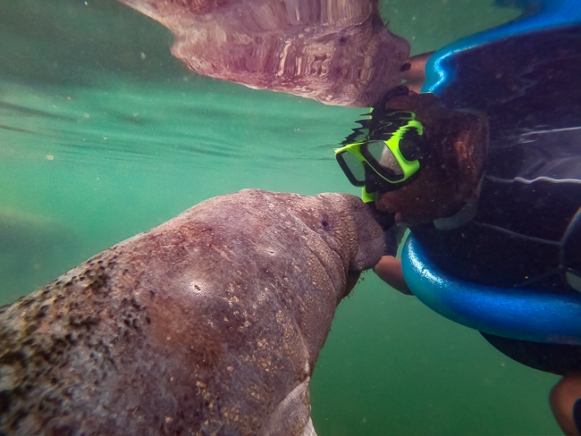 swim with manatees in florida