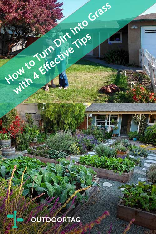 How to Turn Dirt into Grass