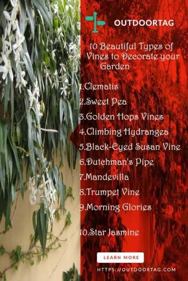 Types of Vines
