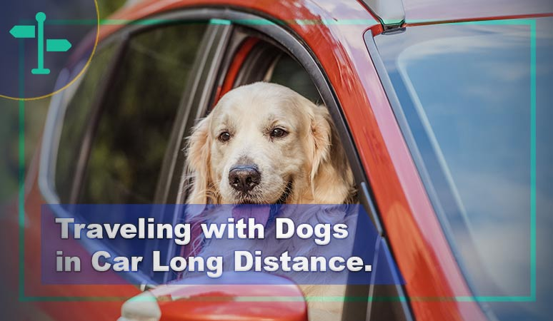 When Traveling with Dogs in Car Long Distance.