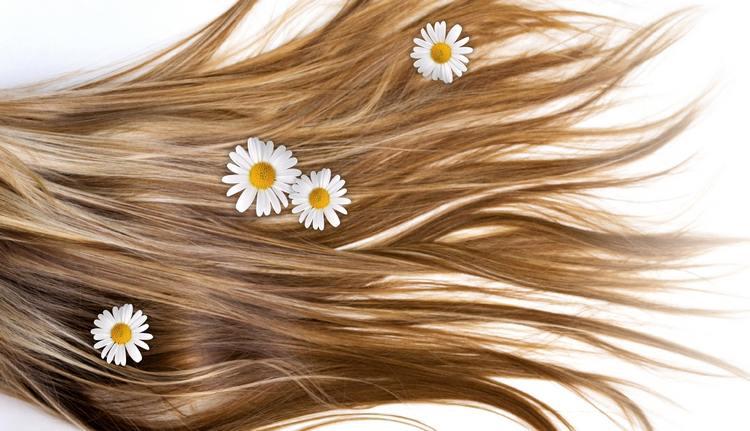 Image result for hair chamomile flower
