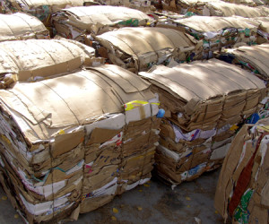 "Perhaps the greatest gift for the environment this holiday season would be a change in how we recycle paper. Photo courtesy of <a href=""http://www.sxc.hu/photo/839897"">SXC</a>."