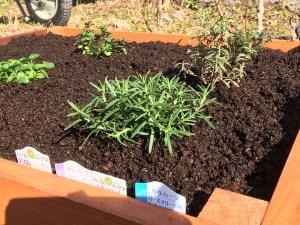 簡単レイズドベッドをDIY!初めての家庭菜園