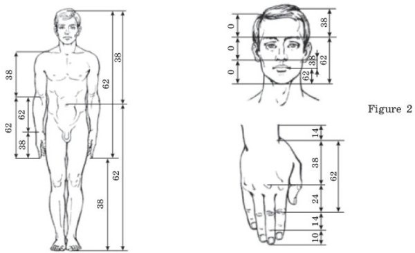 human-body-golden ratio