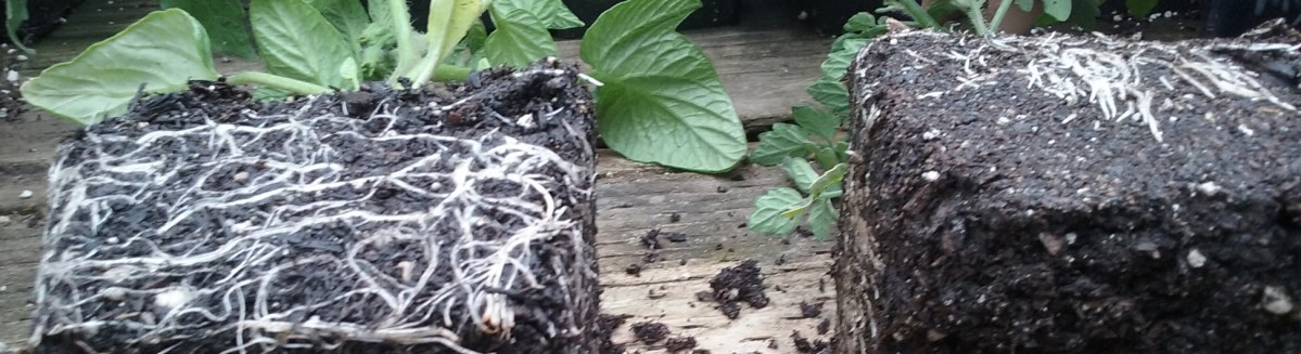Understanding & Explaining Mycorrhizae