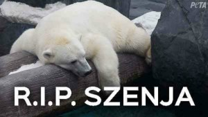 "Polar bear who was separated from her same-sex partner ""dies of a broken heart"""