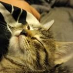 Keeping Our Cats Happy & Healthy #SavorShreddedBlend
