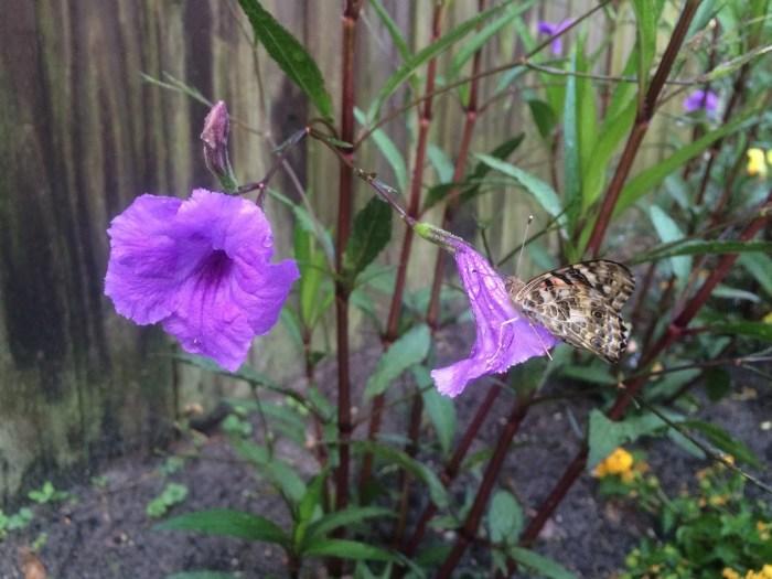 Lakeshore Learning Butterfly Nursery UPDATE – We Have Butterflies!
