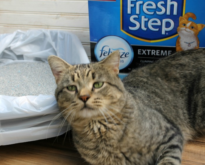 Get Rid of Litter Box Odor with #FreshStepFebreze #Unsmellable