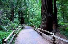 Muir Woods National Monument California Redwood Forest