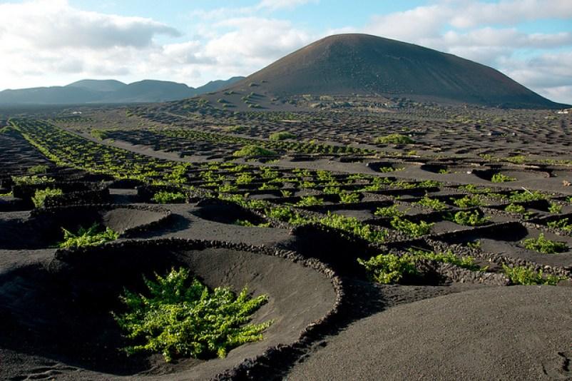 Vigneti lanzarote malvasia vulcanica