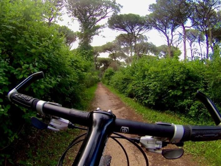 Pineta_di_Classe_Dante_Alighieri_Ravenna_in_bici