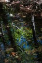 Water reflections in the stream
