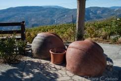 In the Cyprus wine region