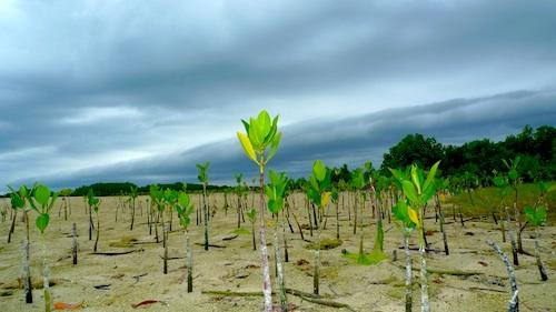 Snake Island Mangrove Area