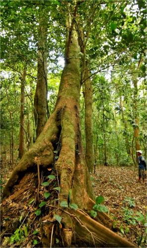 Sandari Forest Trek
