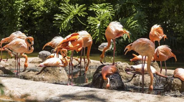 Barcelona Zoo image via Klook