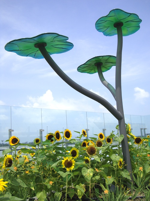 airport Sunflower Garden