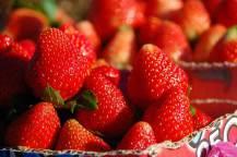 Strawberry Festival 2012