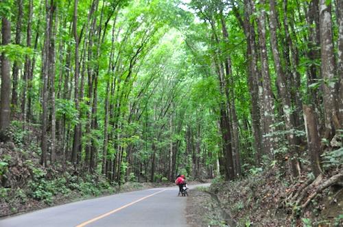 Bilar Manmade Forest