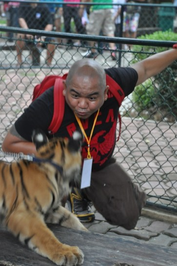 Playing with the Tiger Cub