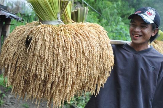 rice harvest festival