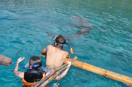 Playful Whale Sharks
