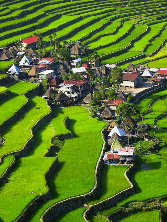 rice terraces in ifugao