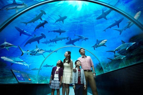 Shark Seas at SEA Aquarium Singapore
