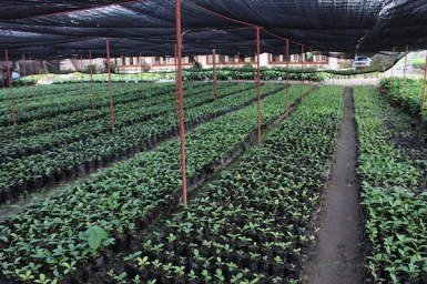 Nescafe Davao Day1- Coffee Nursery
