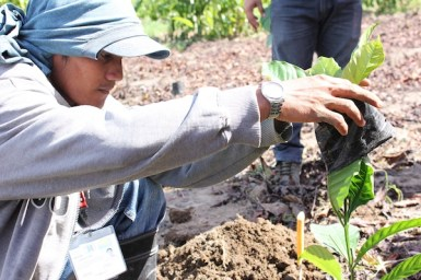 Nescafe Davao Day2- Nestle Demo Farm staff demonstrate the proper technique to plant coffee.