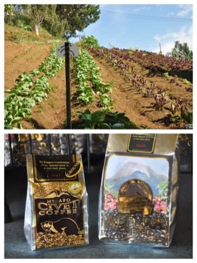 Organic Vegetable and Coffee Farm
